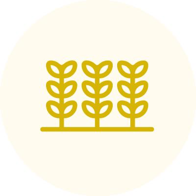 icon-amministrazione-produzione