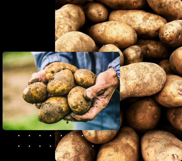 patata veneta